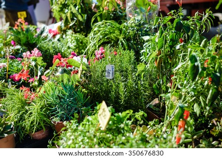 Photo of green small green plants seedlings and blossoming flowers in pots displayed on market stand for sale  - stock photo