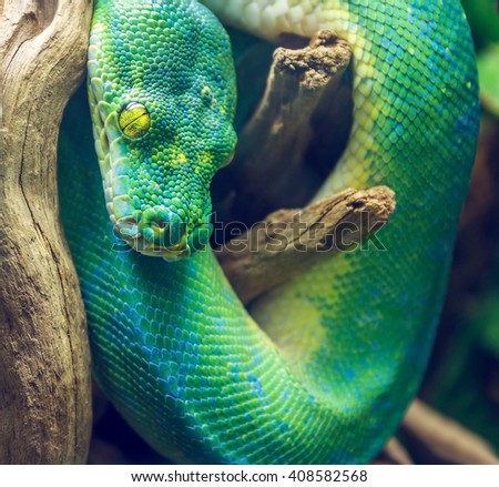Photo of Green Snake on a Branch. Dangerous Exotic Shake Sitting on a Wooden Branch in Tropical Forest - stock photo