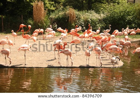 photo of group of  flamingous