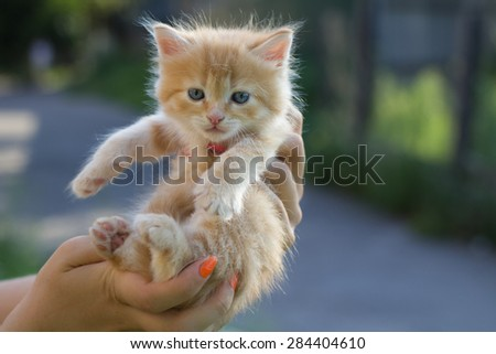 Photo of kitten to find him owners. Red small kitten in woman hands at blurred background. - stock photo