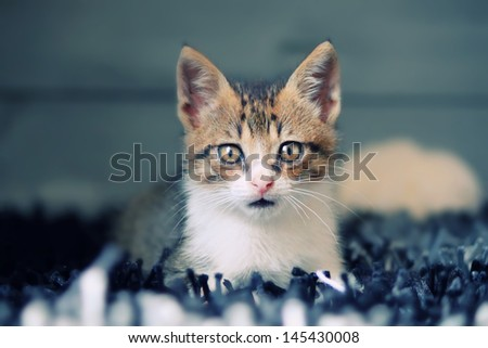 Photo of lying kitten - stock photo
