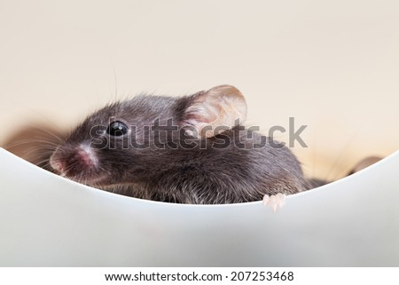 Photo of mouse look out the partition - stock photo
