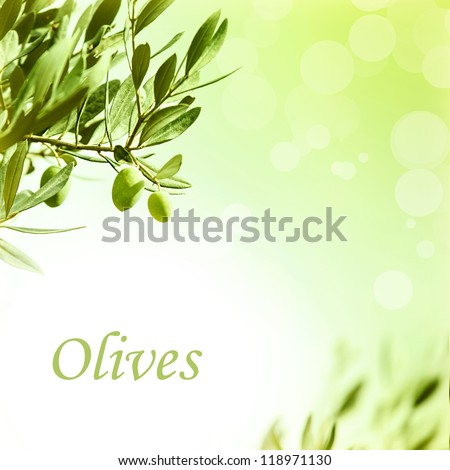 Photo of olive branch border, fresh green olives backdrop, beautiful leaves frame, abstract autumn background, image of ripe fruits with copyspace for text, organic and healthy nutrition concept - stock photo