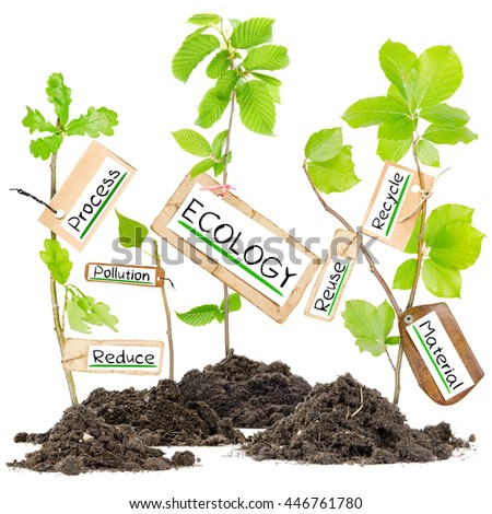 Photo of plants growing from soil heaps with ECOLOGY conceptual words written on paper cards - stock photo