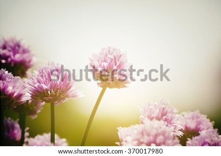 Photo of Spring or Summer Flower in Sunny Day - stock photo