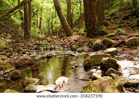Photo of the beautiful brooks in the forest - stock photo