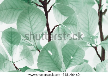 Photo of the turquoise leaves in summer