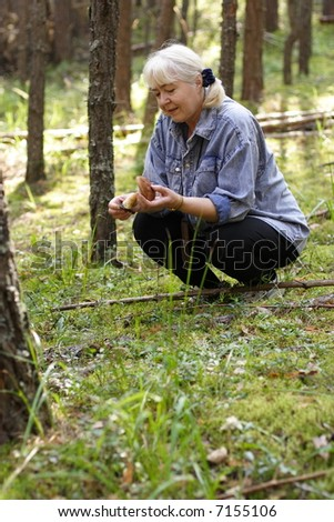 Photo of the women collecting mushrooms in a pine forest in a sunny day