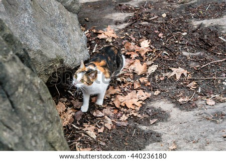 Photo of Three Color Cat Wandering at Central Park, New York