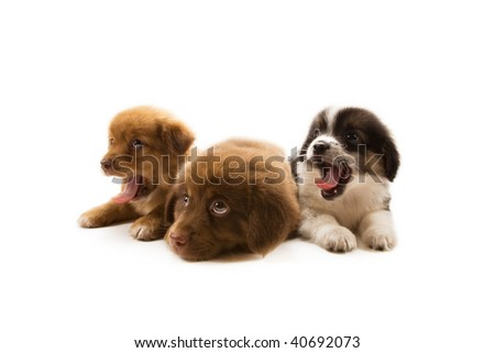 Photo of three cute puppies isolated on white background