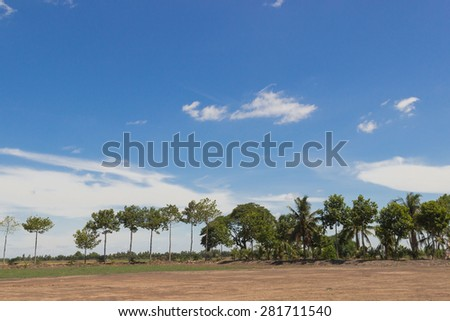 photo of tree and sky
