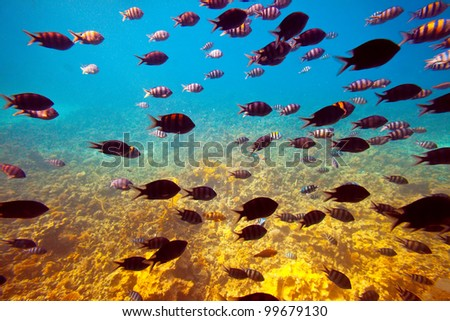 Photo of tropical fishes at coral reef area - stock photo