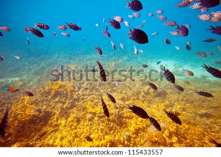 Photo of tropical fishes on coral reef area