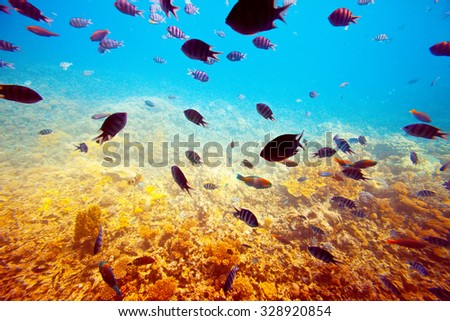 Photo of tropical fishes on coral reef area - stock photo