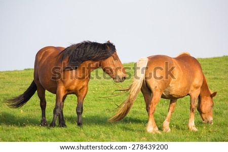 Photo of two horses on the grass - stock photo