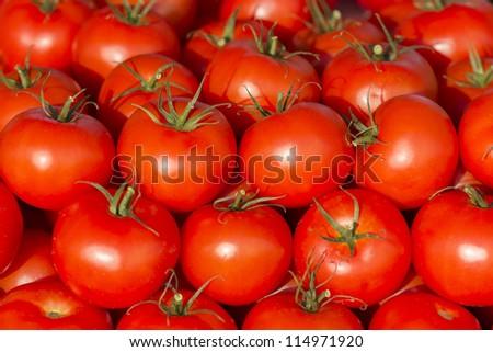 photo of very fresh tomatoes - stock photo