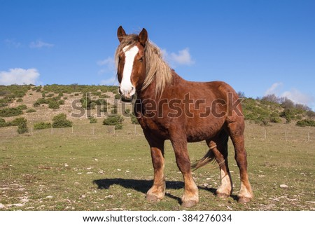 Photo of wild horse in mountain. - stock photo