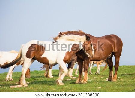 Photo of wild horses walking on the mountain - stock photo