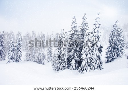 Photo of winter landscape with trees covered by snow - stock photo