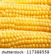 Photo of yellow corn background, abstract backgrounds, harvest season, healthy organic nutrition, maize cob, golden textured wallpaper, fresh prepared grain, tasty vegetable, vegetarian meal - stock photo