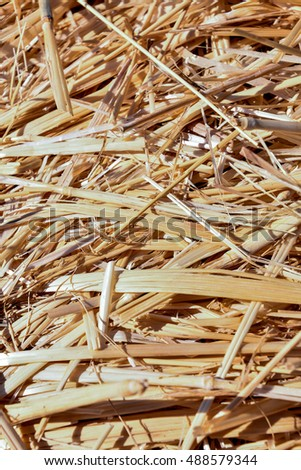 Photo picture Background of The natural texture dry straw