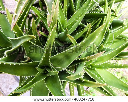 Photo Picture of a Tropical Cactus Texture Background