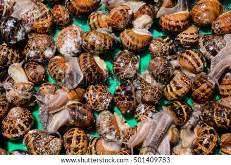 Photo picture of brown animal Edible snail escargot