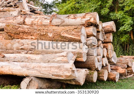 Photo Picture of the Beautiful Wood Background Texture