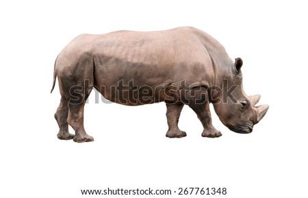 Photo Rhino isolated on white background - stock photo