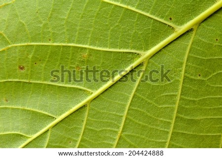 Photo shows detail of green leaf texture background. - stock photo