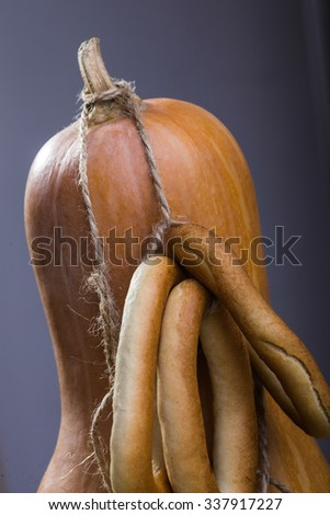 Photo still life closeup partial one big gourd standing with bunches of hard oval cracknels bind with string on stalk over grey background, vertical picture