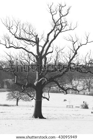 Photo taken at Attenborough's field in Watford, UK on the morning of the first snowy day in December.