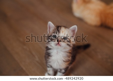Photo taken from the top. Little cat is sitting and looking up.  Wooden floor background