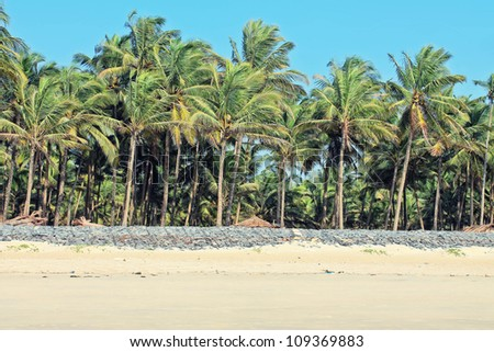 Photo with bright beach and palm trees