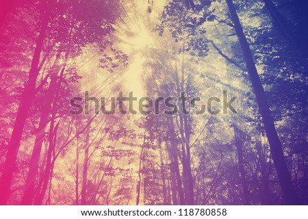 Photo with green forest - stock photo