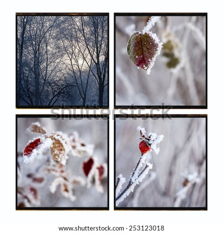 Photocollage rosehip berries in the frost winter background vintage paper texture - stock photo