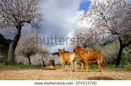 photograph of a dog and almond trees