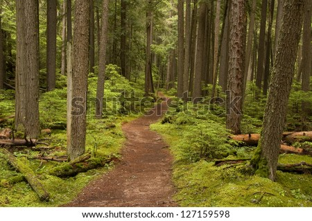 Photograph of a trail tracking deep into the shadowed forest of Glacier National Park in Montana. - stock photo