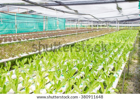Photograph of hydroponic vegetable farm.
