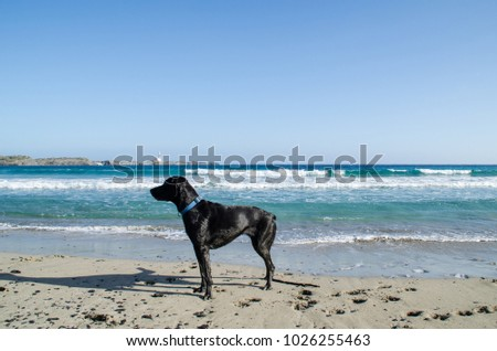Photograph of landscape a dog by one of the beaches of Menorca.