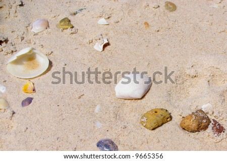 Photograph taken at Henley Beach featuring a collection of washed-ashore shells and rocks (Adelaide, South Australia). - stock photo