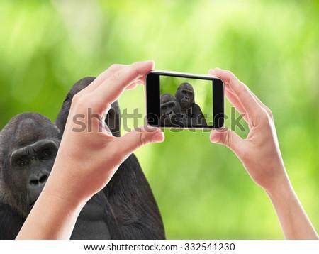 photographed two gorillas smartphone - stock photo
