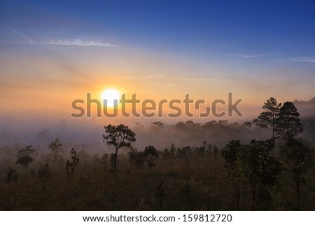 photographer shooting sunrise in the forest