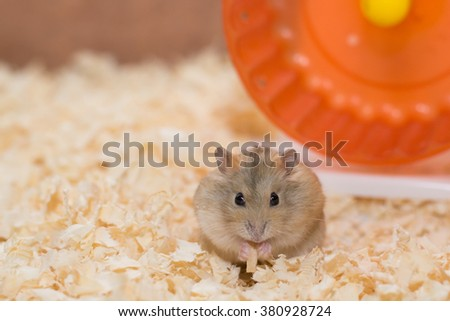 Photographers want to present performances of Hamster - stock photo
