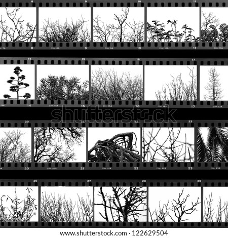 Photographs of trees and plants film proof sheet. Black and white. - stock photo
