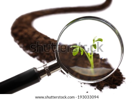 Photography close-up analysis of a young plant with a magnifying glass - stock photo