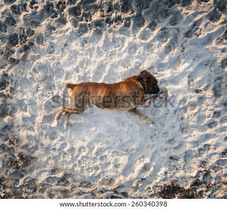 photography of a dogs playing in the beach - stock photo