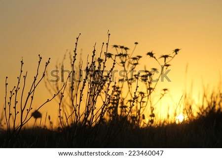photography, sunset, backlight, plants, dry field