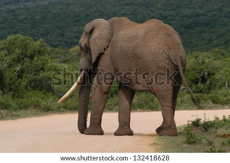 Photos of Africa, Elephant