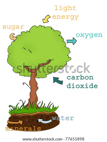 Photosynthesis explicative plan with text. Digital colors - stock photo